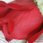 Recomendaciones para este Sant Jordi